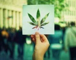 Cannabis Law 101